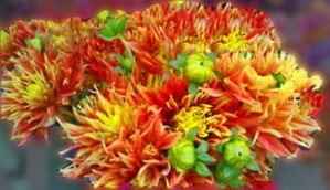 FLOWERS 112014